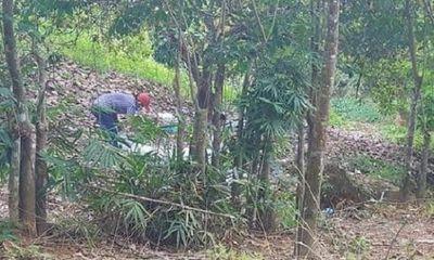 Tin tức thời sự mới nóng nhất hôm nay 28/11/2019: Phát hiện chi tiết lạ trong vụ thi thể không đầu tại vườn điều ở Bình Phước