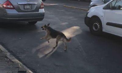 Rớt nước mắt cảnh chó bị bỏ rơi vẫn cố đuổi theo xe của chủ