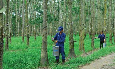 Tập đoàn Cao Su muốn chuyển đổi mục đích sử dụng hơn 18.000 ha đất, lãnh đạo Đồng Nai nói gì?