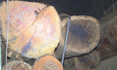 Đắk Lắk: Sử dụng hồ sơ giả để vận chuyển gỗ lậu đi tiêu thụ