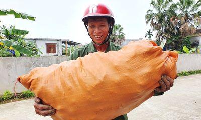 Giải cứu khoai lang tại Hà Tĩnh: Ấm lòng hình ảnh người chở hàng miễn phí