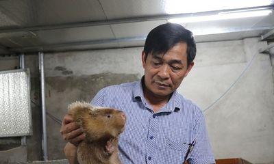 Video: Nông dân chia sẻ bí quyết nuôi chuột 'khủng' kiếm nửa tỷ mỗi năm