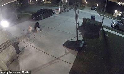Video: Thú cưng ăn vạ nằm lăn yêu cầu chủ bế vào nhà