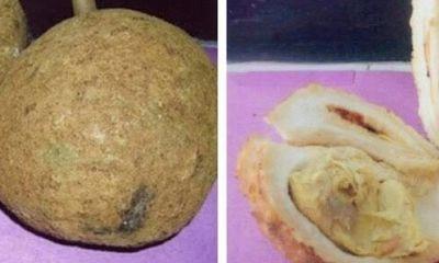 Kỳ lạ quả sầu riêng không có gai, không phải ai cũng có thể trồng được