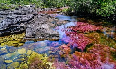 Ngỡ ngàng trước vẻ đẹp đầy mê hoặc của dòng sông ngũ sắc