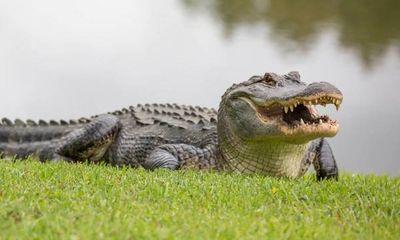 Người phụ nữ tử vong sau khi vuốt ve và chụp ảnh với cá sấu