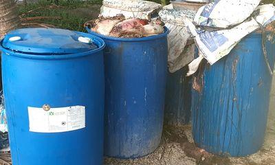 Đàn cá Koi 200 con chết bất thường, công an vào cuộc điều tra