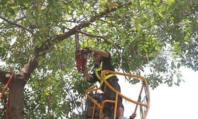 Hà Nội yêu cầu tổng rà soát cây xanh trong trường học