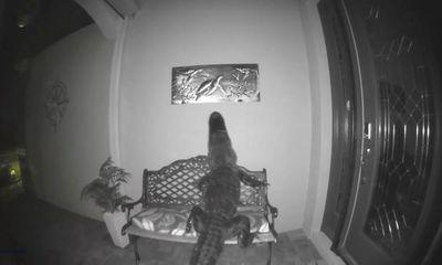 Video: Mò vào nhà dân kiếm ăn lúc rạng sáng, cá sấu bất ngờ vồ rùa trên tranh treo tường