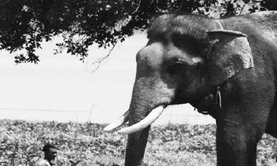 Voi húc chết người chăm sóc: Đã đến lúc dừng sử dụng động vật hoang dã phục vụ thương mại