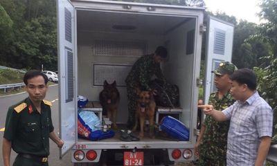 Chùm ảnh: Hàng trăm chiến sĩ công an, chó nghiệp vụ vây bắt phạm nhân vượt ngục trên núi Hải Vân