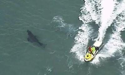 Bị cá mập trắng khổng lồ tấn công, người đàn ông 60 tuổi tử vong thương tâm