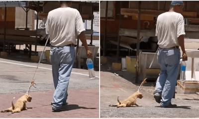 Tin tức đời sống mới nhất ngày 10/6/2020: Kéo lê chó trên đường, chủ nhận