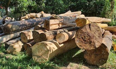 Vì sao gỗ lậu