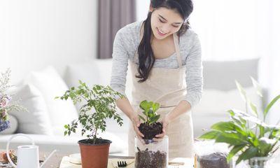 Mẹo hay tưới cây cho người bận rộn, dù ngày hè nắng nóng cây vẫn tươi tốt
