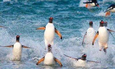 Video: Khám phá hòn đảo chỉ có cặp vợ chồng sống cùng 10.000 con chim cánh cụt