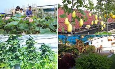 Video: Biến sân thượng nắng cháy thành khu vườn râm mát, lại có rau trái để ăn