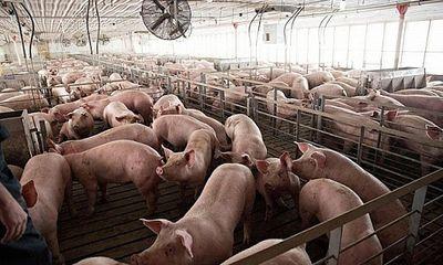 Giá thịt lợn hôm nay 15/7: Đồng loạt tăng 1.000 - 3.000 đồng/kg