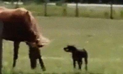 Video: Con chó ngộ nghĩnh mang cà rốt đến cho bạn ngựa vào mỗi buổi sáng