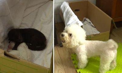 Video: Cảm động cảnh chó mẹ chăm sóc báo đen bị bỏ rơi