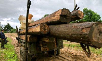 Gia Lai: Phát hiện lâm tặc dùng xe độ chế chở gỗ lậu