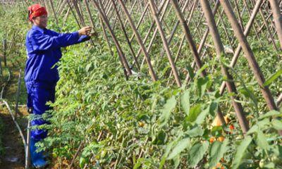 Huyện Thạch Thất- Hà Nội:Phát huy thế mạnh xây dựng nông thôn mới