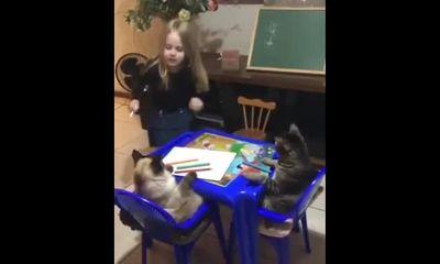Video: Cô bé