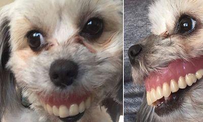 Cô gái không nhịn được cười với bộ dạng của chó cưng khi gửi bố trông hộ để đi làm và câu chuyện
