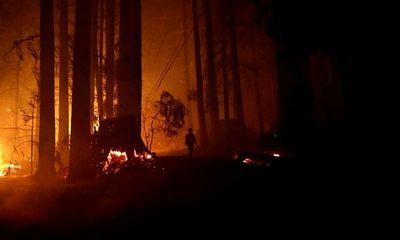 Tổng thống Trump gây tranh cãi khi tuyên bố nguyên nhân dẫn tới cháy rừng