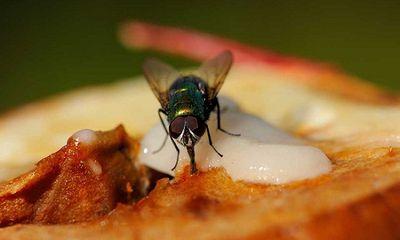 Mách bạn độc chiêu khiến bọn ruồi