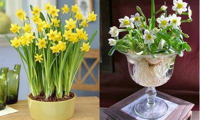 Đặt 5 loại hoa này trong phòng khách, Thần Tài