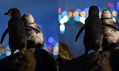 Sự thật đằng sau bức ảnh 2 chú chim cánh cụt cùng cảnh