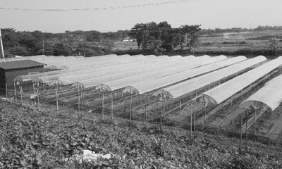 """Bí quyết làm giàu - Chuyện về kỹ sư bỏ việc lương cao """"về vườn"""" làm nông dân, thu nhập khủng"""