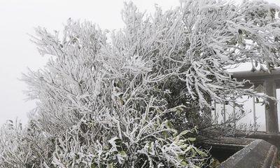 Băng tuyết phủ trắng đỉnh Mẫu Sơn, dù rét buốt du khách vẫn ùn ùn kéo lên tham quan