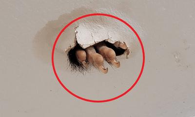 Đang ở phòng tắm, ngước lên trần nhà, người phụ nữ phát hiện thấy 1 thứ khiến ai cũng