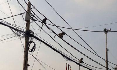 Tin tức thời sự ngày 14/1: Lên phương án di dời đàn khỉ