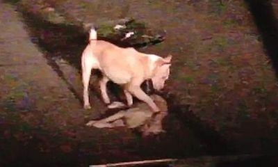 """Thổn thức trước khoảnh khắc chú chó nhỏ cố gắng lay gọi """"người bạn"""" đã chết trong tuyệt vọng"""