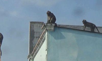 Vụ đàn khỉ