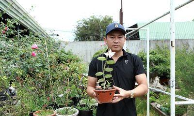 Phạm Thăng Bằng: Thầy giáo phố núi bén duyên với lan rừng