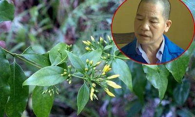 Thiếu tá công an tiết lộ hành trình phá vụ dùng lá ngón đầu độc 5 người ở Tuyên Quang