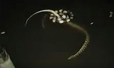 Video: Rắn cạp nia hạ gục con mồi trong nháy mắt bằng chiêu