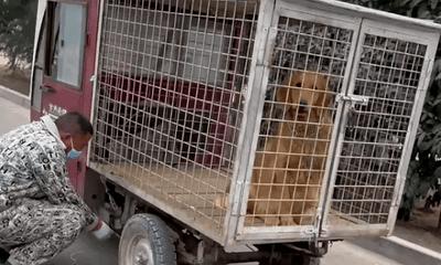 """Giải cứu con chó sắp bị đưa đến lò mổ, người đàn ông vui sướng vì nhận """"quà hồi đáp"""" quá lớn"""