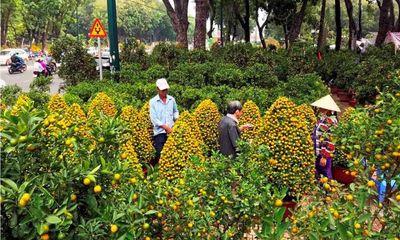Sức mua hoa Tết giảm đến 50%, sở Công thương TP.HCM kêu gọi