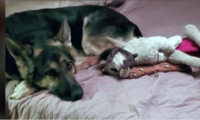 Nhận nuôi cô chó nhút nhát, người đàn ông không ngờ quyết định này một ngày lại cứu sống mình