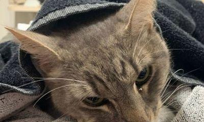 Tin tức đời sống ngày 17/2: Mèo cắn chết rắn độc để cứu 2 em nhỏ