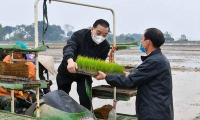 Bí thư, Chủ tịch UBND TP Hà Nội xuống đồng cấy lúa cùng nông dân Thạch Thất