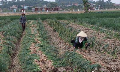 Nông sản Hải Dương khó tiêu thụ vì COVID-19: Bộ Công Thương đề nghị tháo gỡ