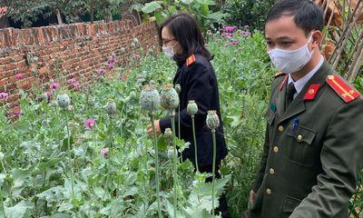 Tin tức pháp luật mới nhất ngày 21/2: Người đàn ông trồng anh túc và cần sa trong vườn khai gì?