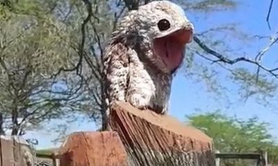 Video: Loài chim kỳ lạ khiến người chứng kiến khiếp hãi