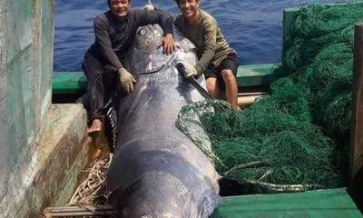 Tin tức thời sự mới nóng nhất hôm nay 22/3: Ngư dân bắt được cá Cờ